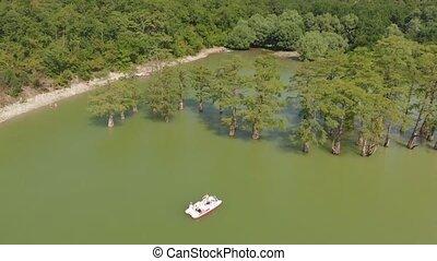 cypresses., montagne, coup, aérien, lac, marais