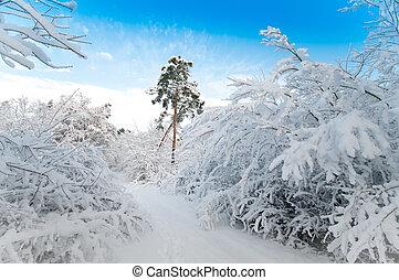 décembre, forêt, neigeux