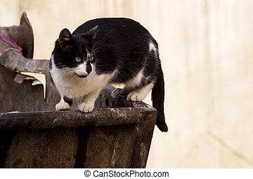 déchets ménagers, réceptacle, chat