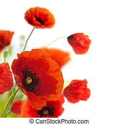 décoration, -, fleurs, coquelicots, floral, coin, frontière, conception