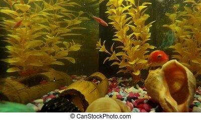 défaillance, réservoir, aquarium, fish, temps