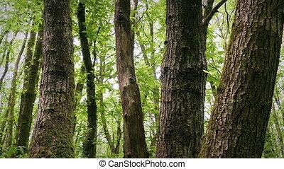 dépassement, arbres, groupe, forêt