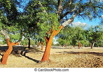 dépouillé, arbres, portugal, bouchon