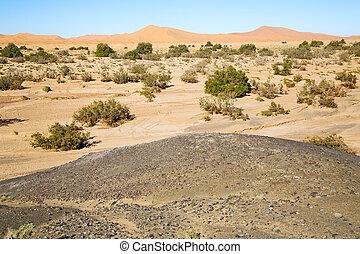 désert, arbre, fossile, vieux