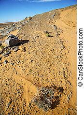 désert, buisson, fossile, vieux, ciel
