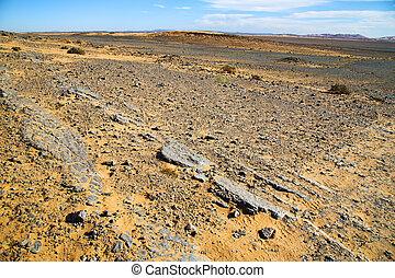 désert, pierre, fossile, vieux, ciel