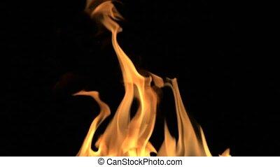 détaillé, brûler, entiers, fond, hd