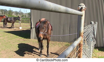 développé, cheval brun