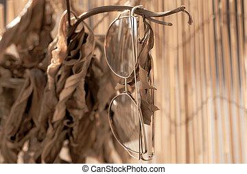 dames, fence., pendre, foyer, oeil, profil, chat, grand, bambou, lunettes soleil, modèle, sélectif, lentilles