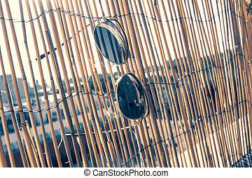 dames, pendre, day., oeil, barrière, classique, chat, bambou, été, lunettes soleil, modèle