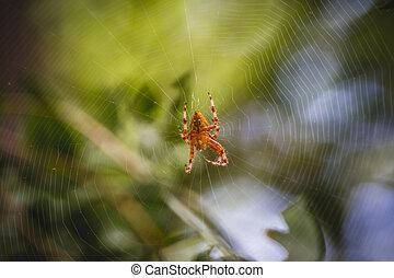 danger, toile, orange, centre, araignés