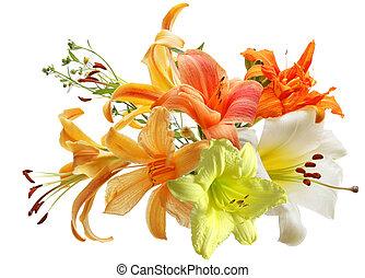 daylily, lis