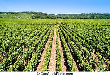 de, nuits, france, vignobles, cote, bourgogne, vue