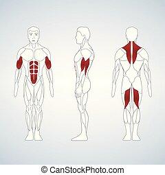 debout, corps plein, vue, dos, longueur, muscle, devant, homme