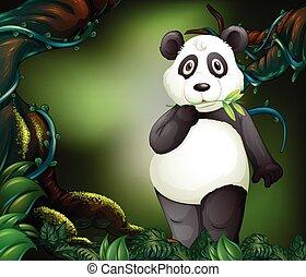 debout, forêt, profond, panda
