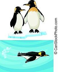 debout, natation, glace, manchots