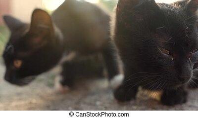 dehors, chatons, mignon, sdf, noir, portrait
