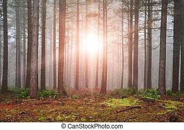dense, éclatement, soleil, arbres, automne, brouillard, par, forêt, automne, paysage