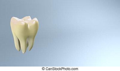 dent, blanc, jaune, processus