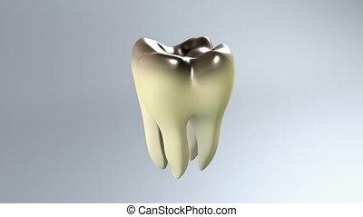 dent, mauvais, fond, blanc