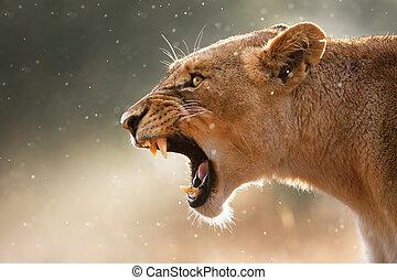dents, dangereux, lionne, displaing