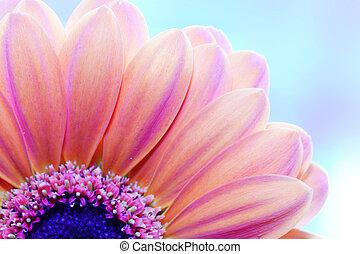 derrière, gros plan, fleur, lumière soleil