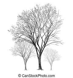 dessiné, -, arbre, main
