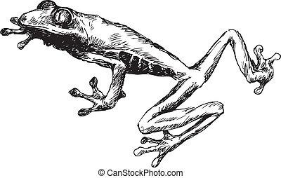 dessiné, grenouille, main