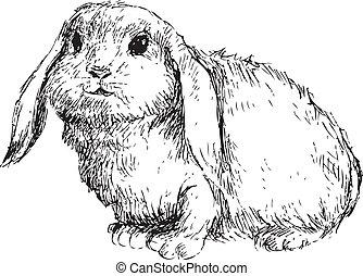dessiné, lapin, main