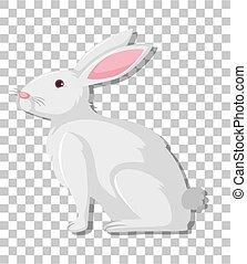 dessin animé, transparent, fond, isolé, lapin blanc