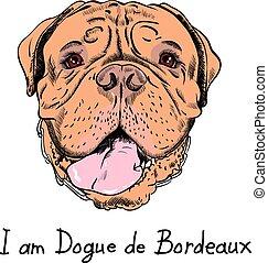 dessin animé, vecteur, hipster, mastiff, chien, rigolote, francais