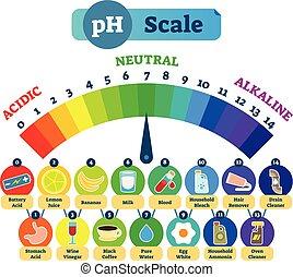 diagramme, échelle, alcalin, illustration, examples., neutre, vecteur, acide, ph, acide