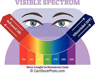 diagramme, colorez spectre, illustration, infrarouge, visible, vecteur, ultra-violet, scale., plan