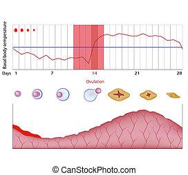 diagramme, fertilité, eps10