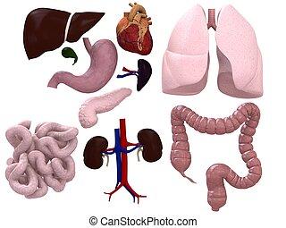 diagramme, organes