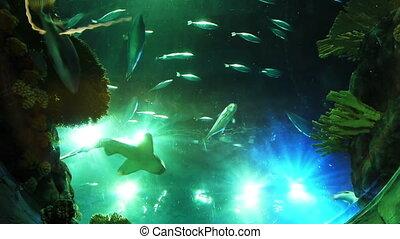 différent, aquarium, fish, beaucoup