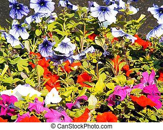 différent, fleurs, groupe, couleurs, cloche