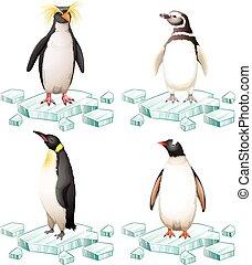 différent, pingouins, types, glace