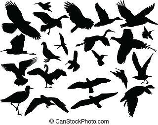 différent, vecteur, -, oiseau, collection