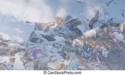 disposition, nuages, gaspillage, sur, oiseaux, animation, site