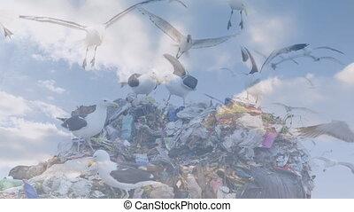 disposition, nuages, gaspillage, sur, oiseaux, animation, voler, site