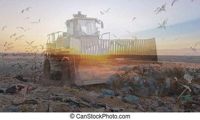 disposition, sur, gaspillage, oiseaux, animation, bulldozer, voler, site