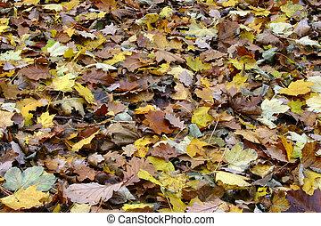divers, mer, automne
