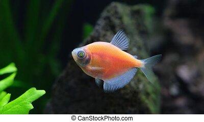 diversité, maison, aquarium., poissons, décoratif, exotique