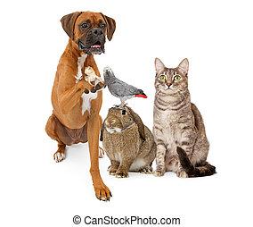 dometic, groupe, animaux familiers, ensemble, séance