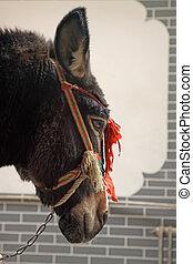 donkey's, tête