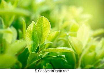 doré, naturel, jardin, espace, vert clair, fond, utilisation, copie