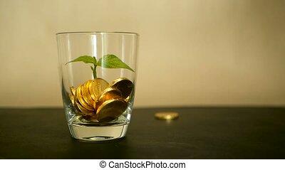 doré, penny., feuille, arrière-plan., pousse, pièces, pot, tourner, tordre, verre, rotation, tourbillonner, vert, noir