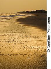 doré, plage, sunset.