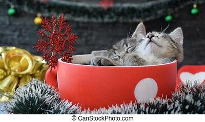 dormir, décorations, grand, chatons, tasse, nouvelle année